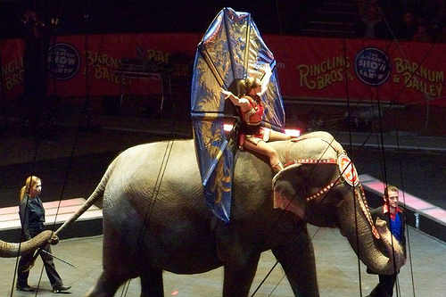 Circus Parade by Yvonne