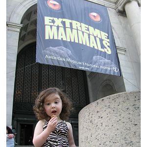 Extreme Mammals Exhibit at AMNH