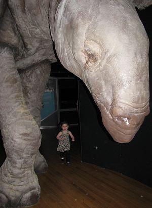 amnh_extreme_indricotherium_sm