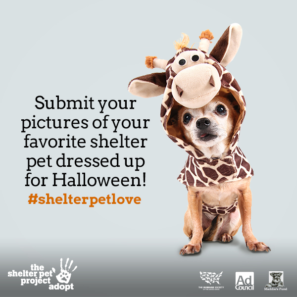 Will You Show Some #ShelterPetLove for Adopt-A-Dog Month?