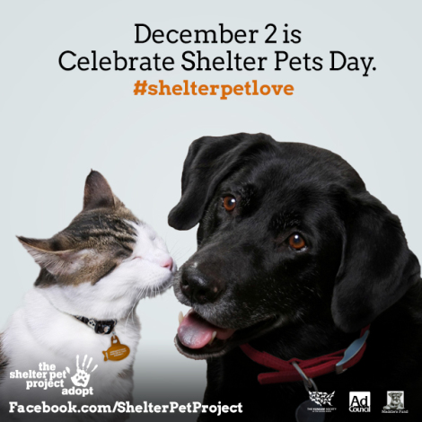 Help Celebrate Shelter Pets Day on December 2nd