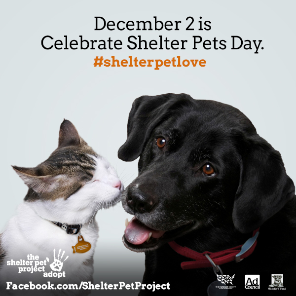 Celebrate Shelter Pets Day Dec 2