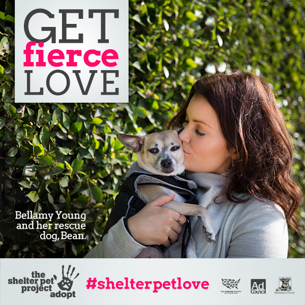 Get fierce love. Adopt a Shelter Pet.