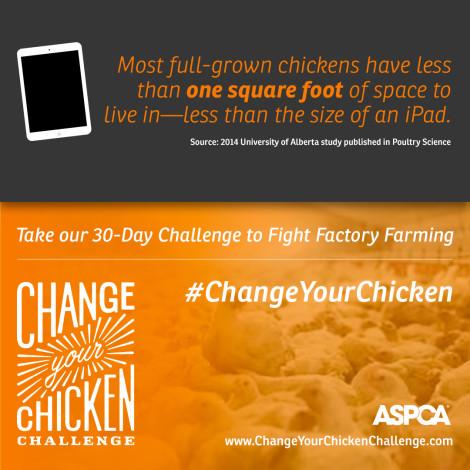 The ASPCA #ChangeYourChicken Challenge