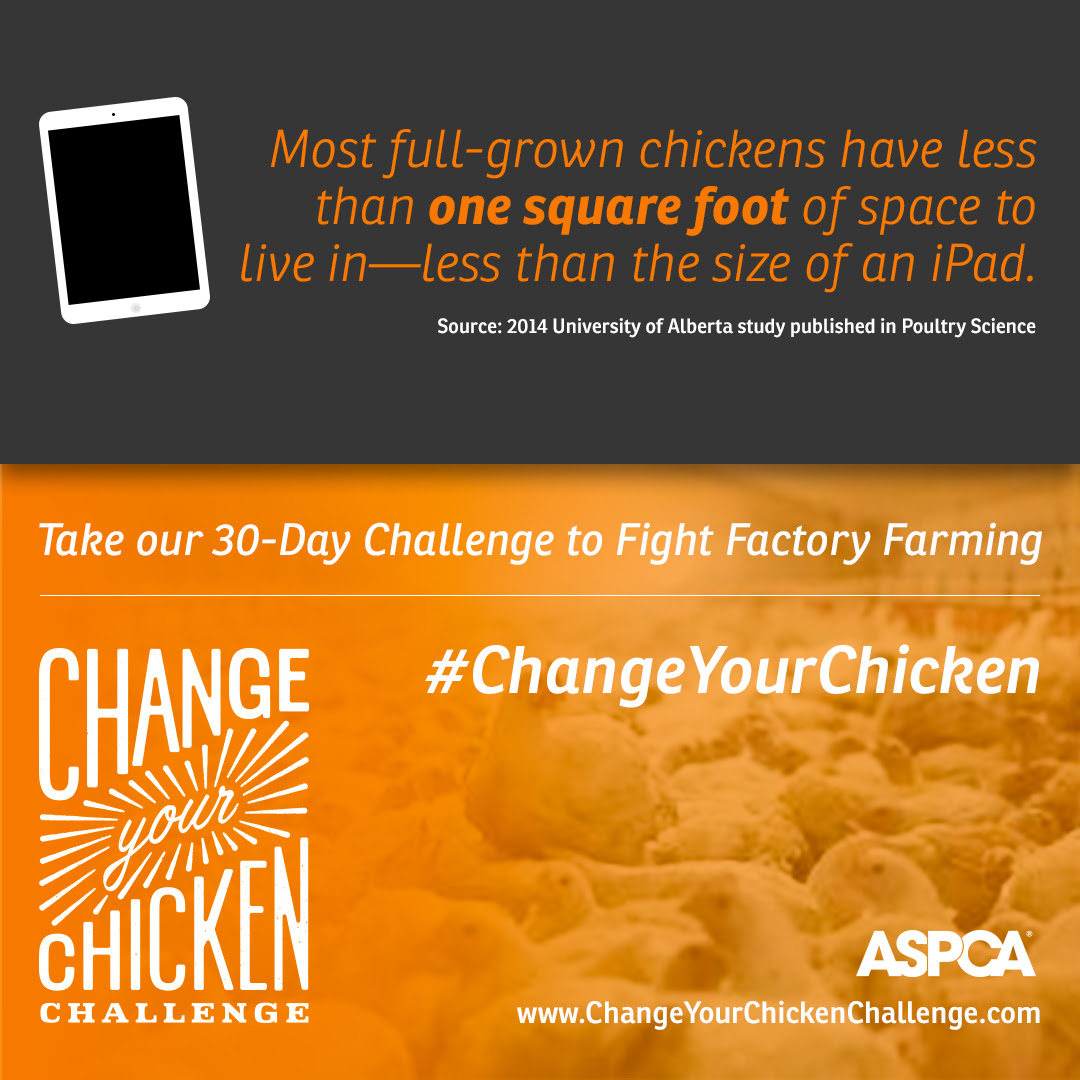 The ASPCA #ChangeYourChicken Challenge